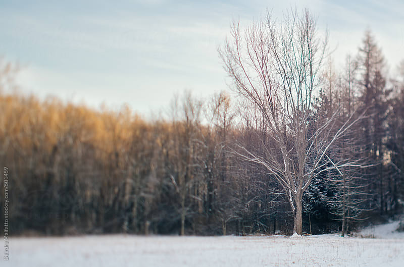 snowy field and woods  by Deirdre Malfatto for Stocksy United