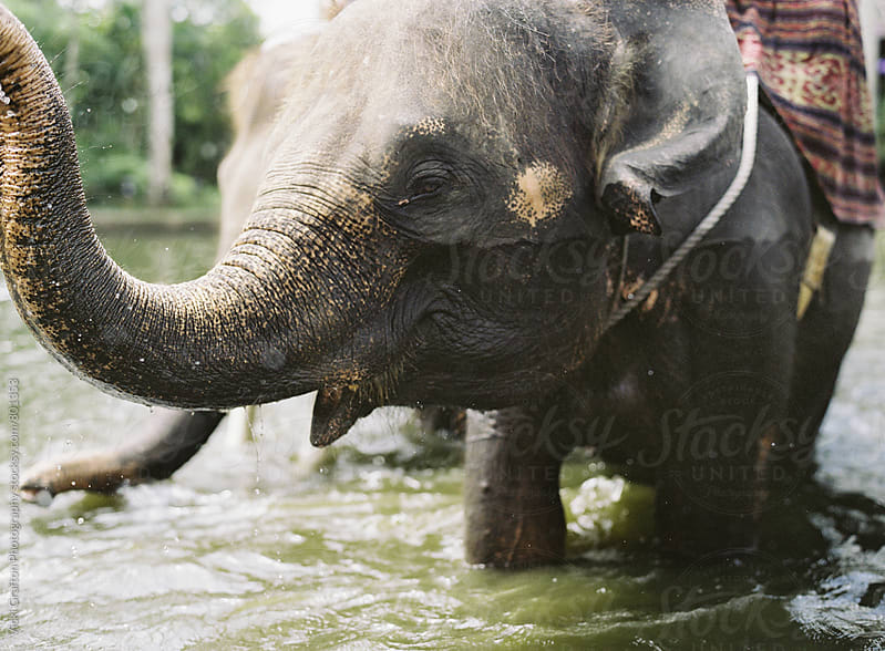 Elephant in the water in Bali by Vicki Grafton Photography for Stocksy United