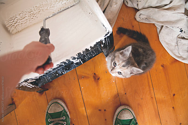trying to paint walls white DIY at home with a cute kitten by Natalie JEFFCOTT for Stocksy United