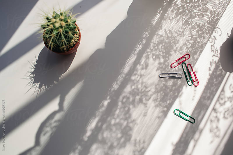 Cactus on the table with interesting shadow by Jovo Jovanovic for Stocksy United
