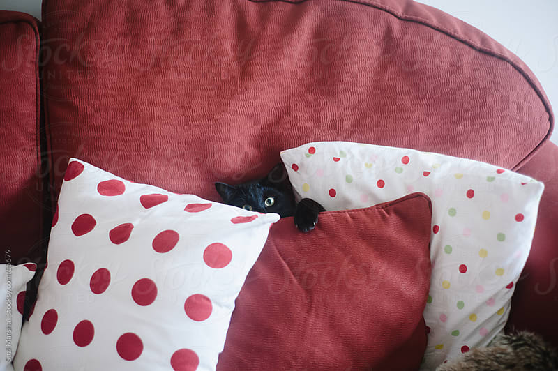Black cat hiding and playing behind cushions on a sofa by Suzi Marshall for Stocksy United