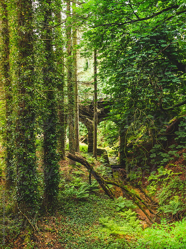 Ancient bridge in the forest by Milena Milani for Stocksy United