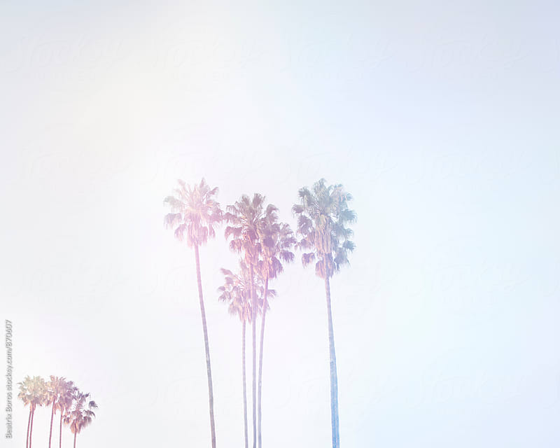 Palm trees in the air by Beatrix Boros for Stocksy United