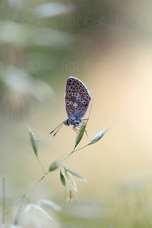 Butterfly resting on blade of grass by Pixel Stories for Stocksy United