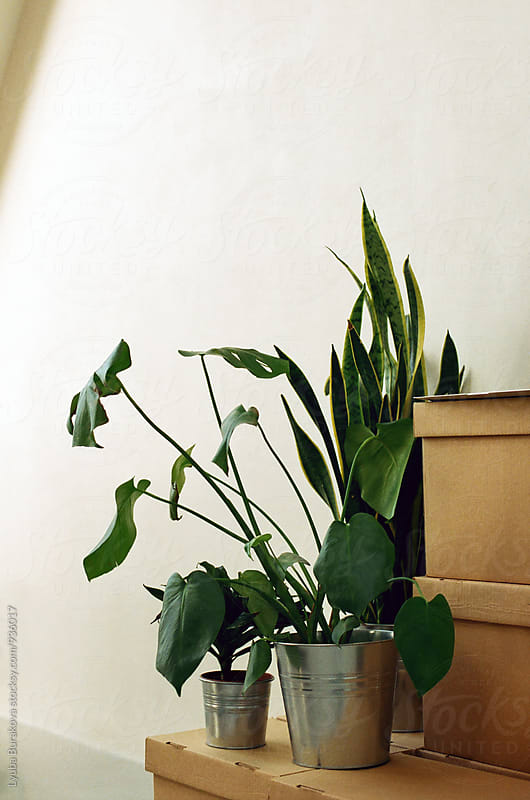 Plants indoors by Lyuba Burakova for Stocksy United