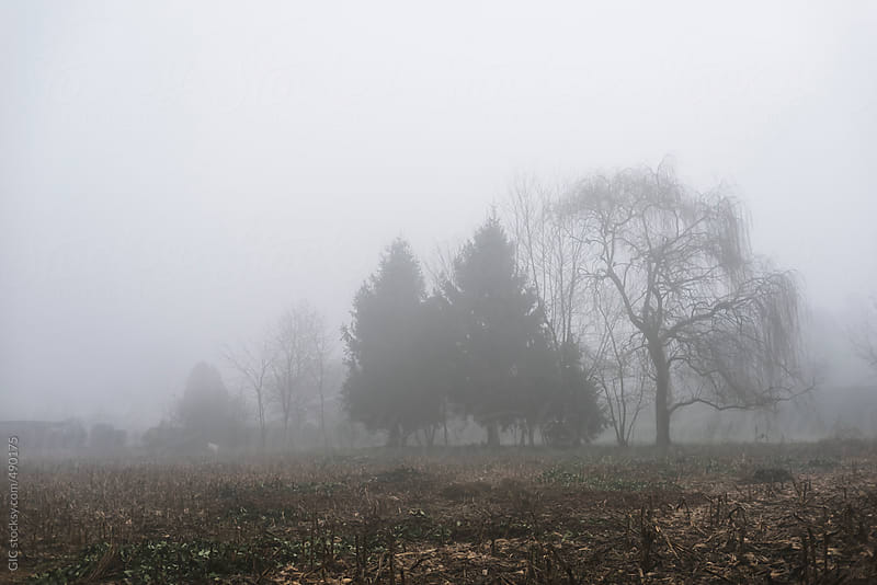 Foggy winter landscape by GIC for Stocksy United