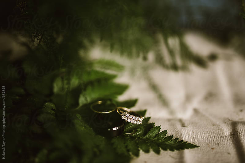 Wedding rings on fern by Isaiah & Taylor Photography for Stocksy United