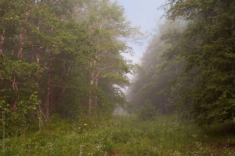 Edge of the forest. Misty summer morning. by Svetlana Shchemeleva for Stocksy United