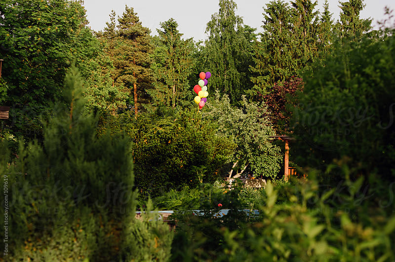 Balloons over some treetops by Tõnu Tunnel for Stocksy United
