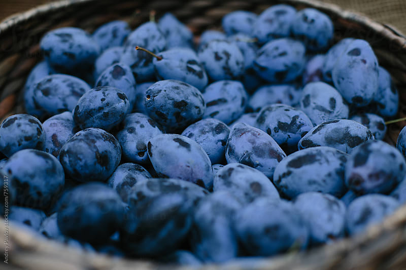 Plums in a basket by Andrey Pavlov for Stocksy United