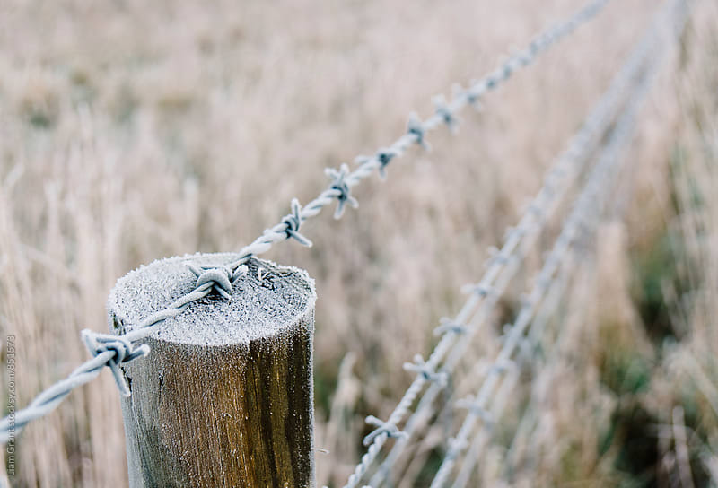 Post and barbed wire fence covered in frost. Norfolk, UK. by Liam Grant for Stocksy United
