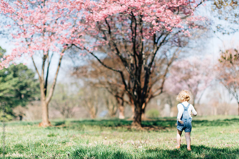little girl playing outside beneath the cherry blossoms in spring by Meaghan Curry for Stocksy United