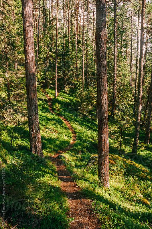Forest scenery  by Dimitrije Tanaskovic for Stocksy United