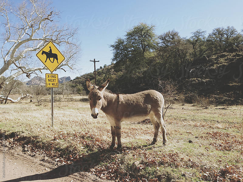 Burro Crossing by Kevin Russ for Stocksy United