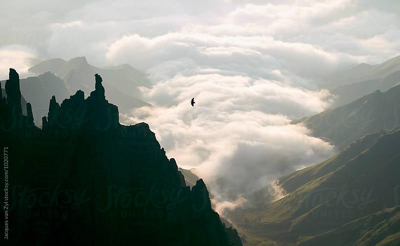 A summit view of a wild and spired mountain picks with clouds and a Cape Vulture. by Jacques van Zyl for Stocksy United
