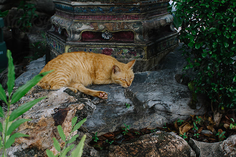 Cute cat sleeping on statue by Jesse Morrow for Stocksy United