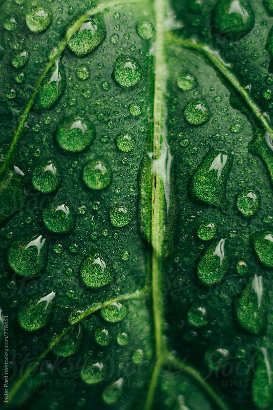 closeup details of plants with drops by Javier Pardina for Stocksy United