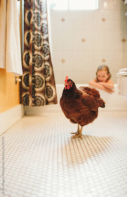 Hen roaming the bathroom with child in bath by Kristin Rogers Photography for Stocksy United