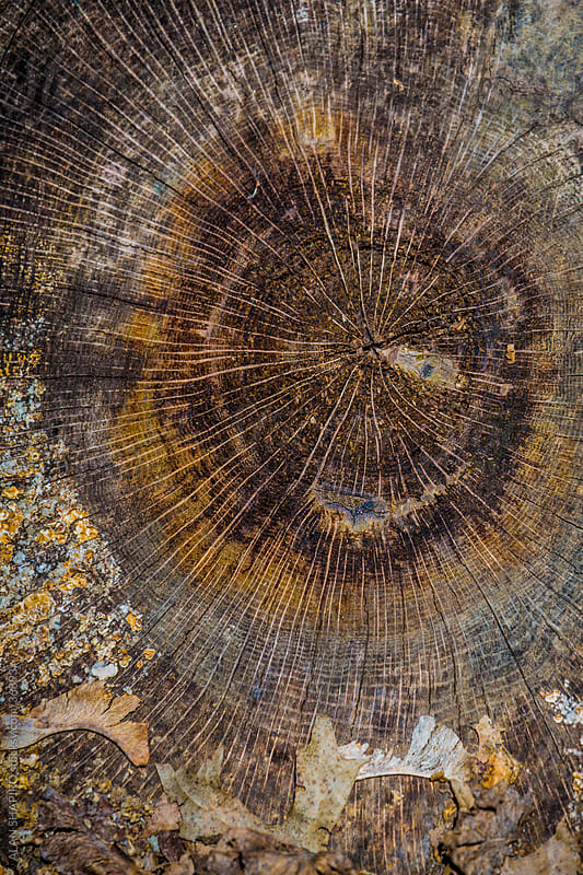 Tree Trunk Aerials by ALAN SHAPIRO for Stocksy United