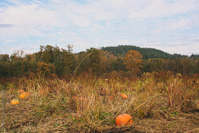 Pumpkin Patch in the Northwest by Gabrielle Lutze for Stocksy United