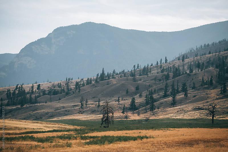 BC Trip Desert by Jake Elko for Stocksy United