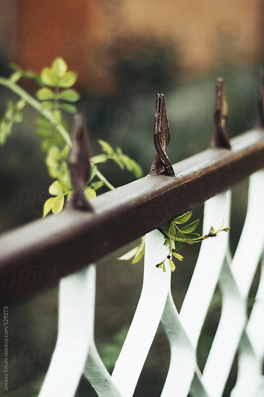 Cast Iron Fence Detail with Shallow Focus by Jovana Rikalo for Stocksy United