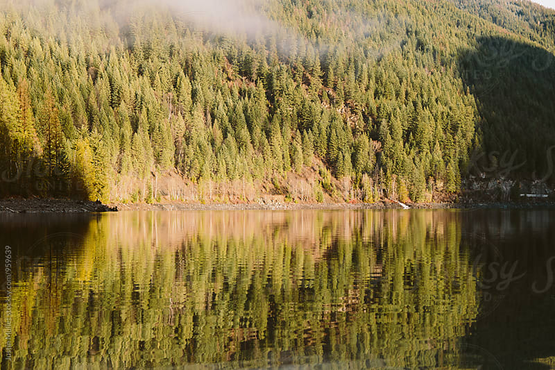 Morning sunlight reflections of pine trees along lake.  by Justin Mullet for Stocksy United
