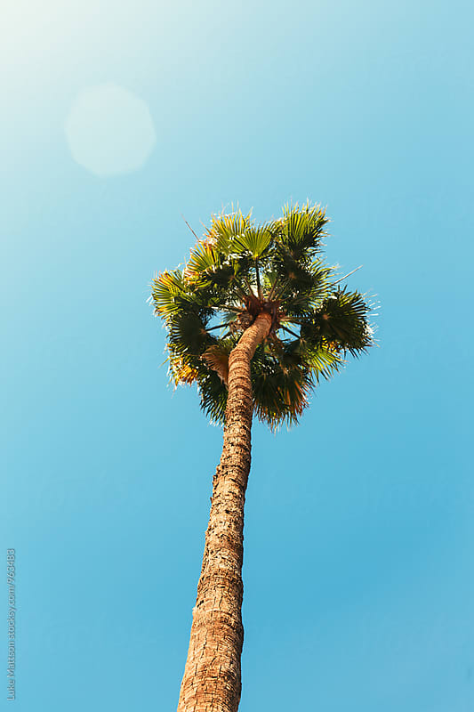 Palm Tree Underneath A Sunny Blue Sky by Luke Mattson for Stocksy United