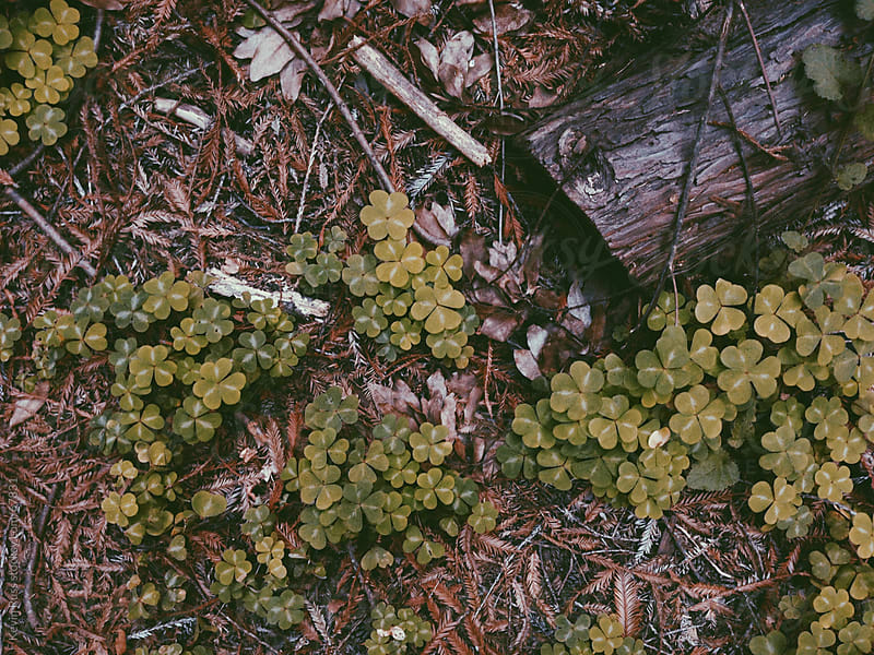 Forest Floor Detail by Kevin Russ for Stocksy United