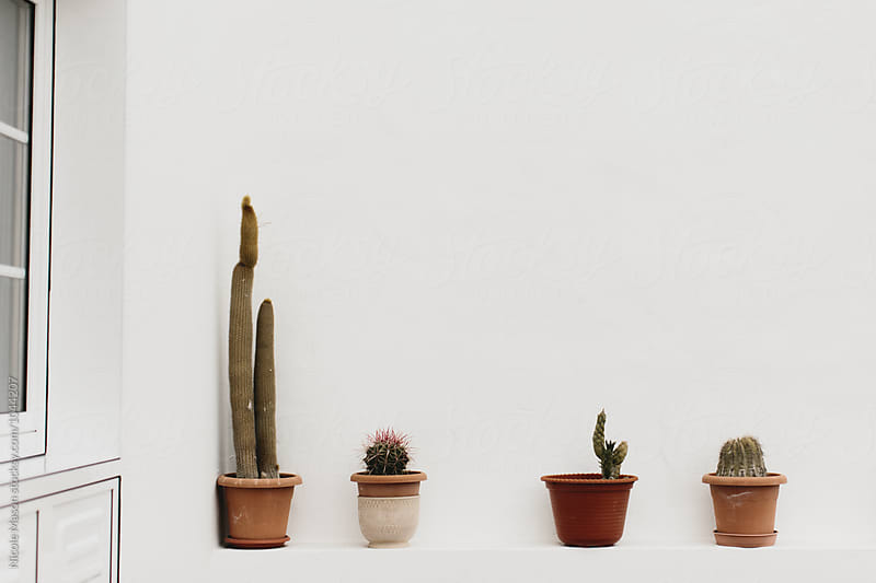 potted plants outside against white wall by Nicole Mason for Stocksy United