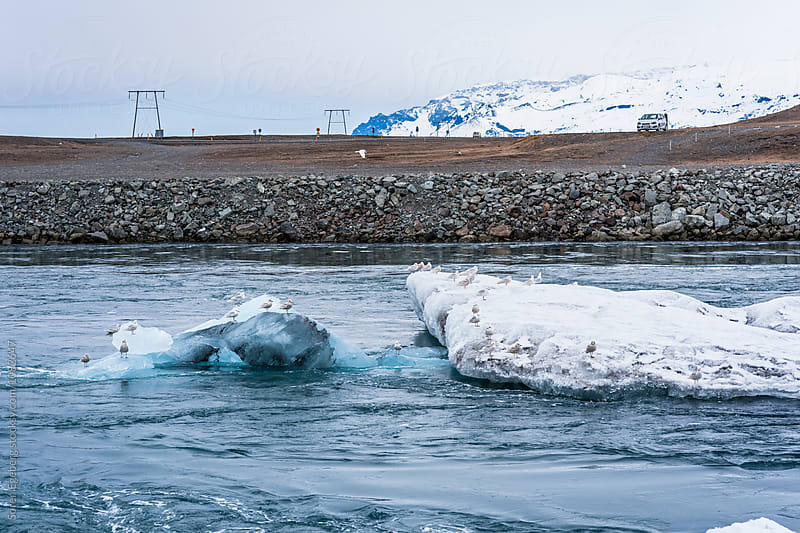 Sea gulls on floating ice in Glacier lagoon in Iceland by Soren Egeberg for Stocksy United