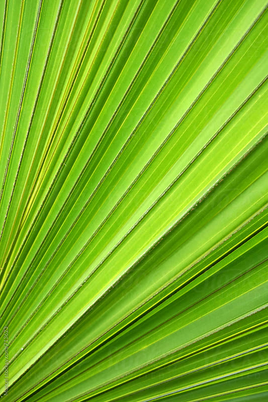 Palm leaf detail by Marcel for Stocksy United