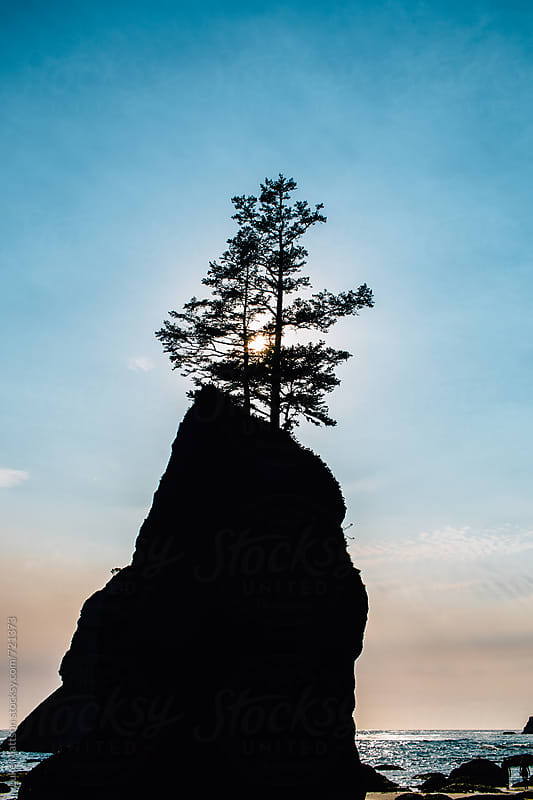 Two Trees Stand On Top Of An Eroded Ocean Rock At Sunset by Luke Mattson for Stocksy United