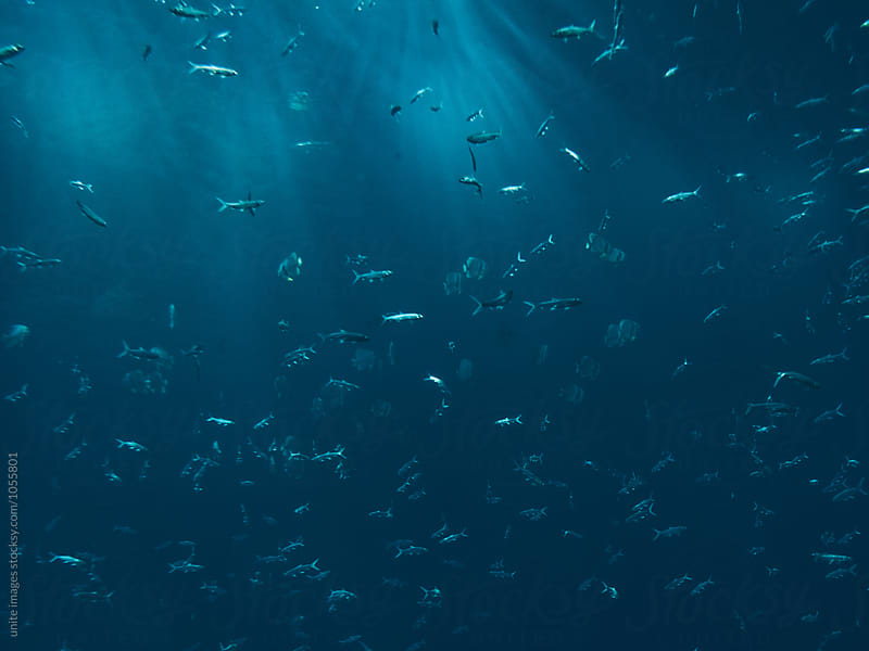 School Of Fish Swimming Under Blue Sea by unite images for Stocksy United