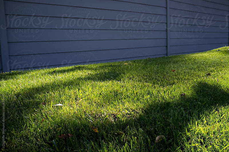 Dinosaur shadow on green lawn by J Danielle Wehunt for Stocksy United