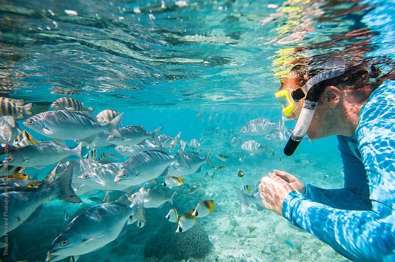 Woman snorkeller watching a school of fish swim past, Aitutaki Island, Cook Islands. by Thomas Pickard for Stocksy United