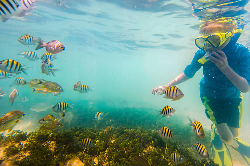 Little Boy Snorkeling On Tropical Reef In Cuba Caribbean Island With School of Colorful Fish by JP Danko for Stocksy United