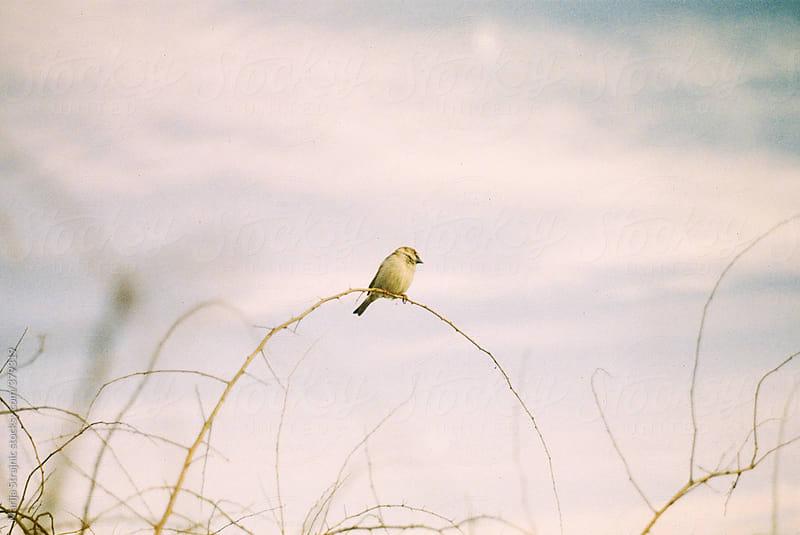 Balancing bird by Marija Strajnic for Stocksy United