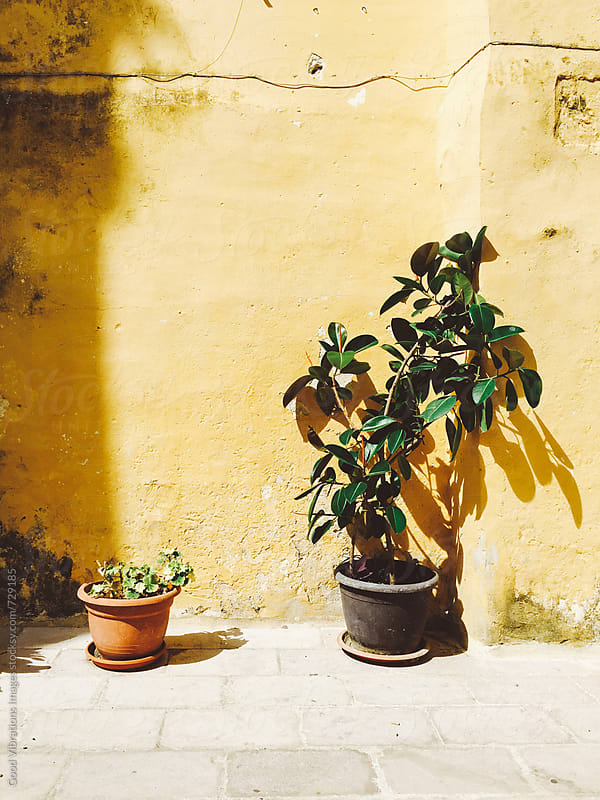 Potted Plants in Italy by Good Vibrations Images for Stocksy United