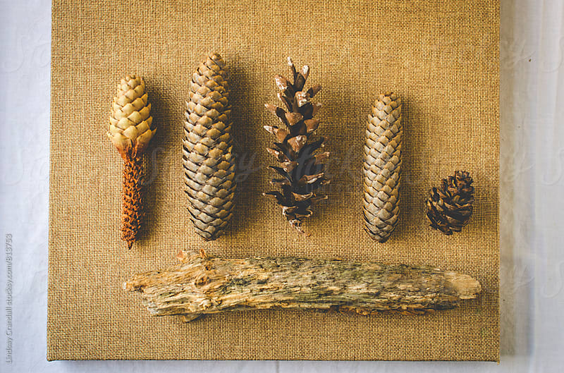 Pine cones and wood arranged on a table by Lindsay Crandall for Stocksy United