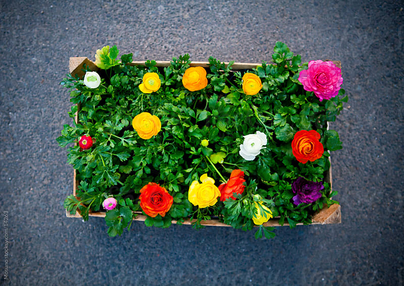 Colorful spring flowers in a wooden crate. by Mosuno for Stocksy United