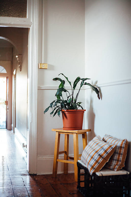 Interior of Terrace House with Houseplant on stool by Kara Riley for Stocksy United