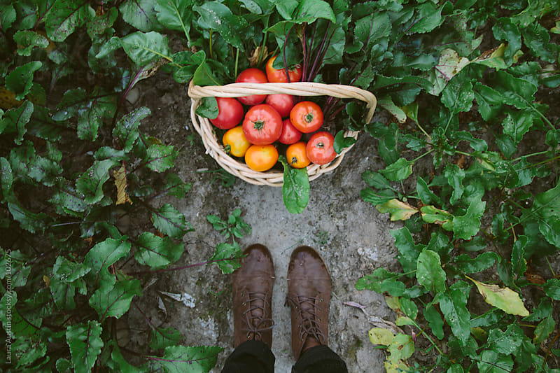Fresh Picked Garden Vegetables by Laura Austin for Stocksy United