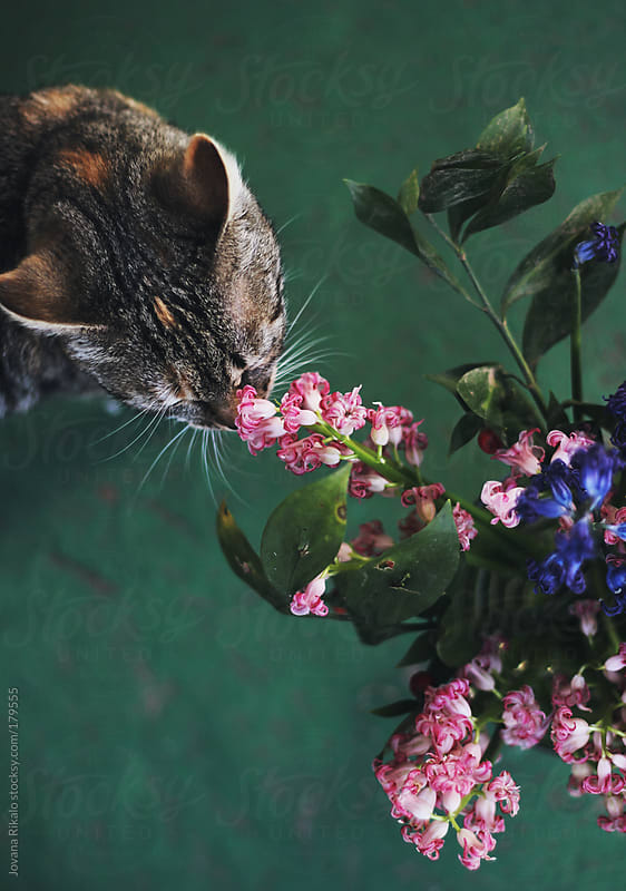 Cat is smelling flowers by Jovana Rikalo for Stocksy United