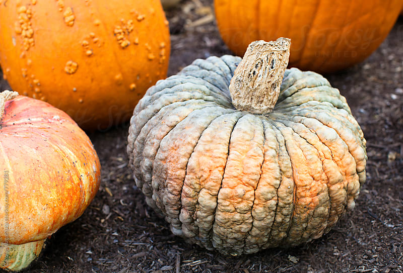 Unusual wrinkled pumpkin by Carolyn Lagattuta for Stocksy United