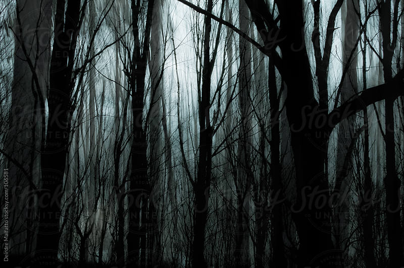 dark misty woods in winter by Deirdre Malfatto for Stocksy United
