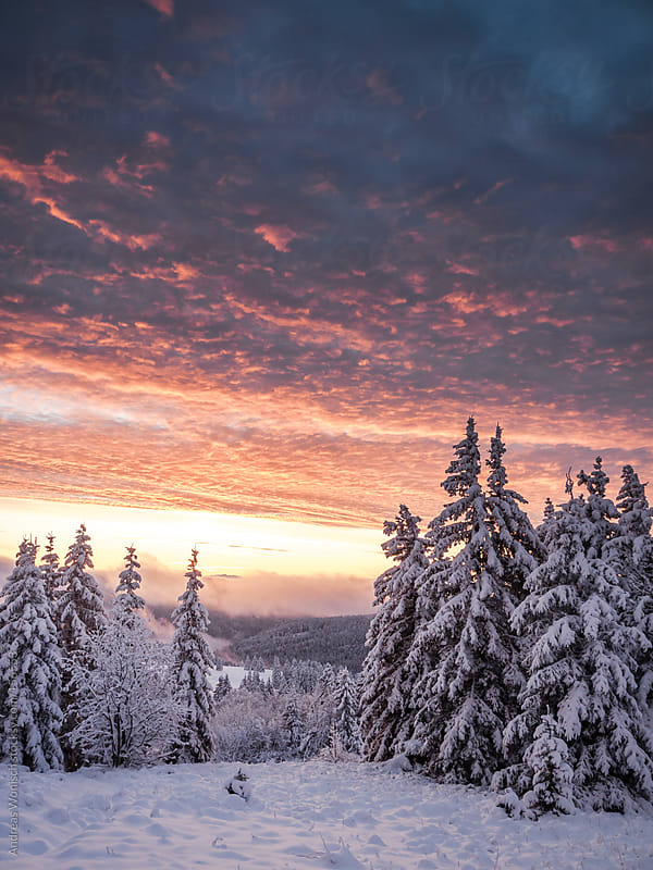 Dramatic, colorful Sunrise over Winter Landscape by Andreas Wonisch for Stocksy United