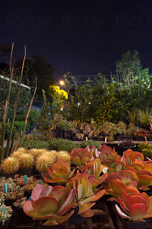 Plant nursery at twilight by Nicole Mlakar for Stocksy United