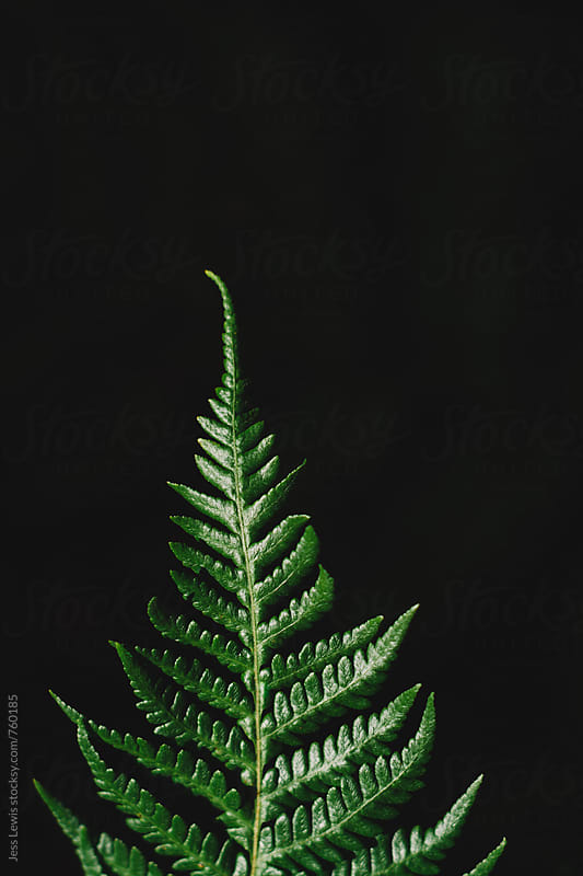 close up of a fern leaf by Jess Lewis for Stocksy United