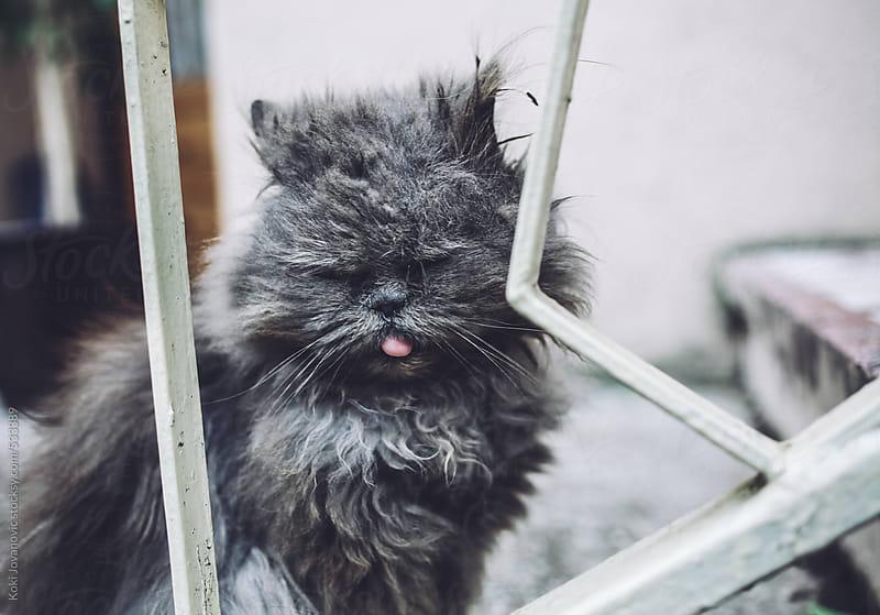 portrait of grey cat with yellow eyes by Koki Jovanovic for Stocksy United